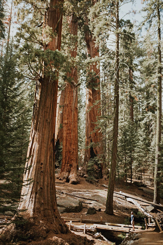 CindyGiovagnoli_Sequoia_Kings_Canyon_National_Park_spring_hiking_dogwood-005.jpg