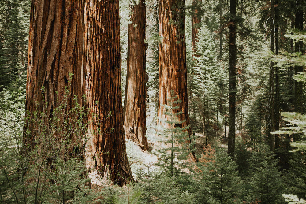 CindyGiovagnoli_Sequoia_Kings_Canyon_National_Park_spring_hiking_dogwood-006.jpg