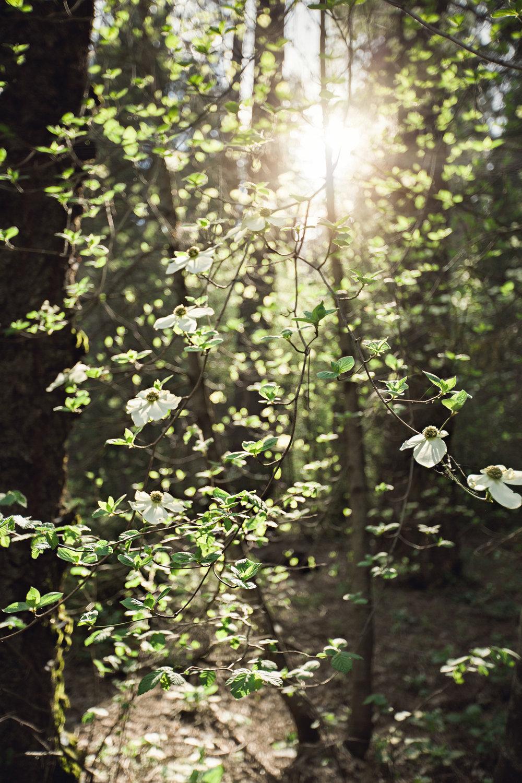 CindyGiovagnoli_Sequoia_Kings_Canyon_National_Park_spring_hiking_dogwood-011.jpg