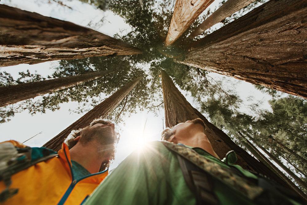 CindyGiovagnoli_Sequoia_Kings_Canyon_National_Park_spring_hiking_dogwood-013.jpg
