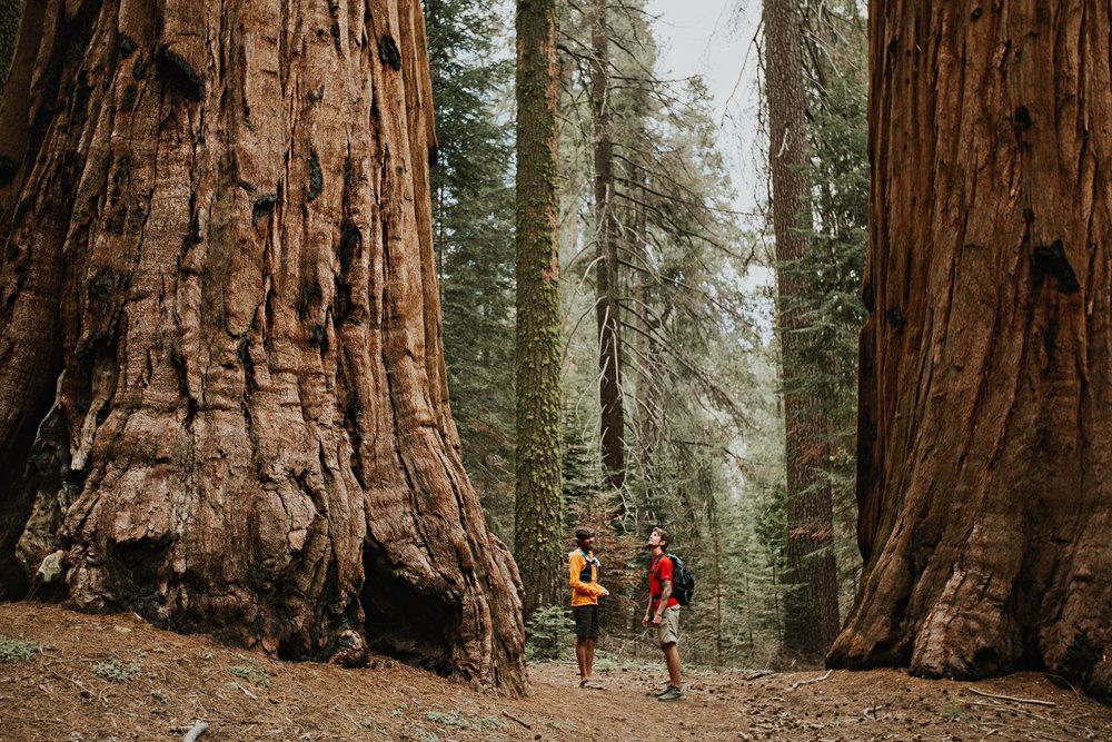 CindyGiovagnoli_Sequoia_Kings_Canyon_National_Park_spring_hiking_dogwood-012.jpg
