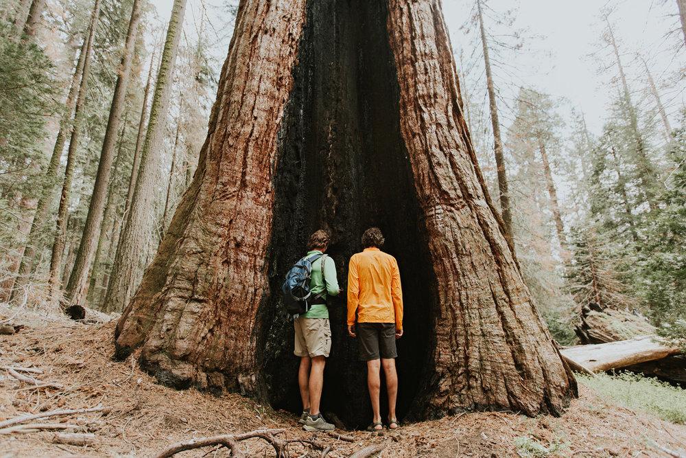 CindyGiovagnoli_Sequoia_Kings_Canyon_National_Park_spring_hiking_dogwood-015.jpg