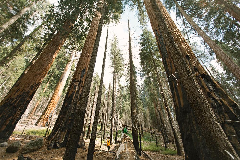 CindyGiovagnoli_Sequoia_Kings_Canyon_National_Park_spring_hiking_dogwood-016.jpg
