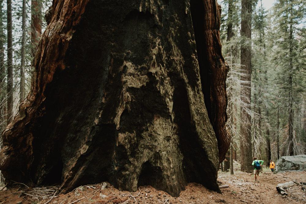 CindyGiovagnoli_Sequoia_Kings_Canyon_National_Park_spring_hiking_dogwood-018.jpg