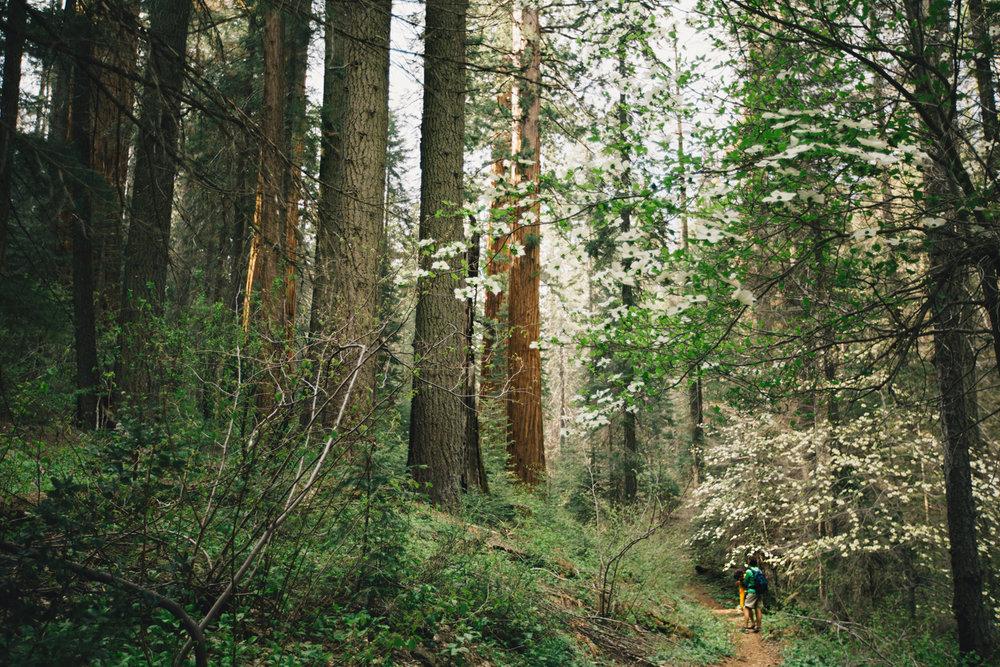 CindyGiovagnoli_Sequoia_Kings_Canyon_National_Park_spring_hiking_dogwood-017.jpg
