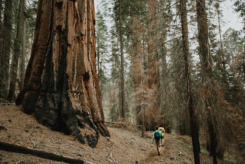 CindyGiovagnoli_Sequoia_Kings_Canyon_National_Park_spring_hiking_dogwood-019.jpg