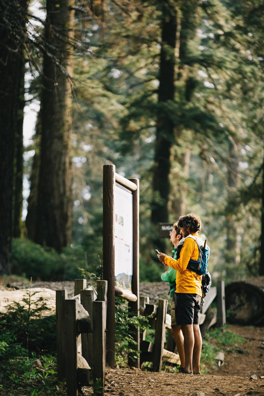 CindyGiovagnoli_Sequoia_Kings_Canyon_National_Park_spring_hiking_dogwood-025.jpg