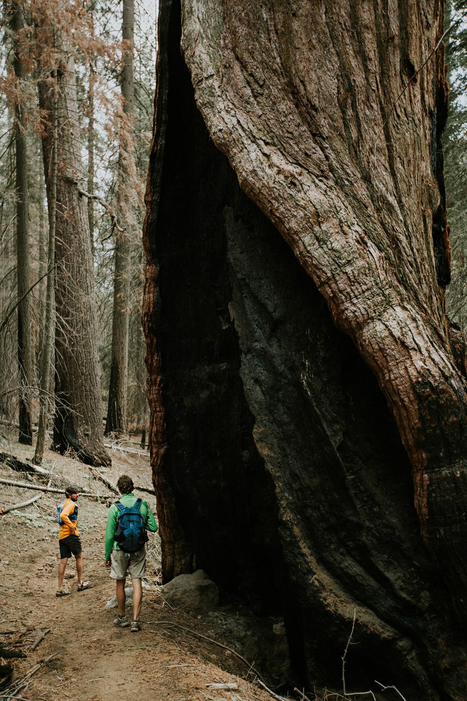 CindyGiovagnoli_Sequoia_Kings_Canyon_National_Park_spring_hiking_dogwood-024.jpg