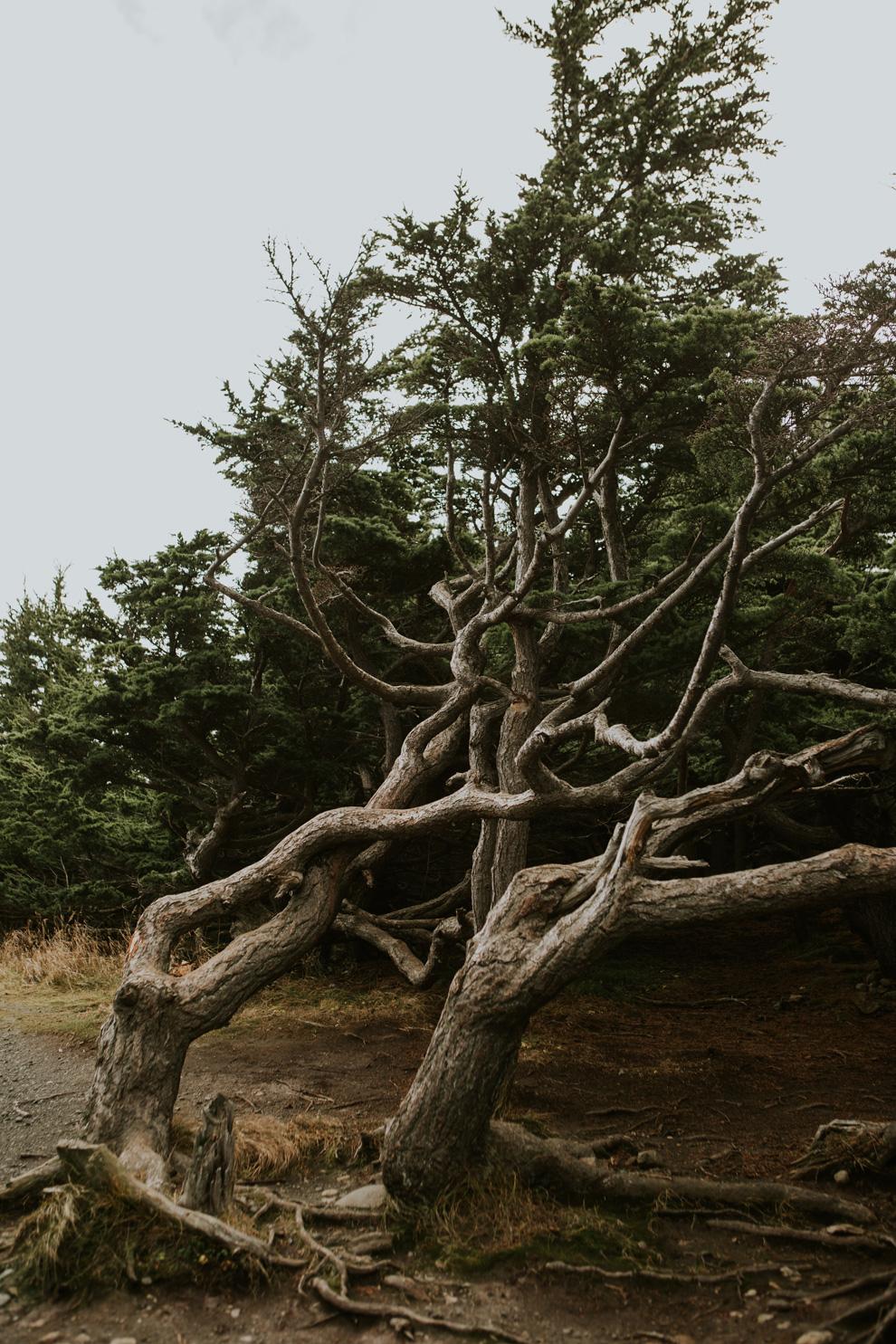 CindyGiovagnoli_Anchorage_Alaska_Flattop_mountain_hike_snocapped-004.jpg