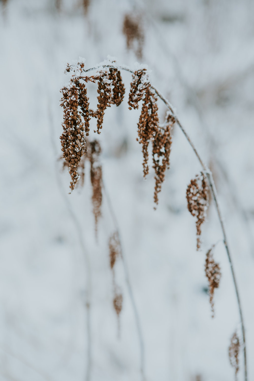 CindyGiovagnoli_hiking_glacier_Anchorage_snow_winter_ByronGlacier_Alaska-007.jpg