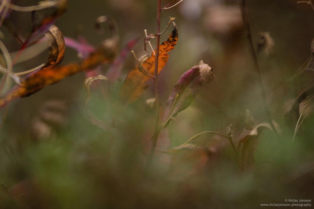 40 - fallcolors.jpg