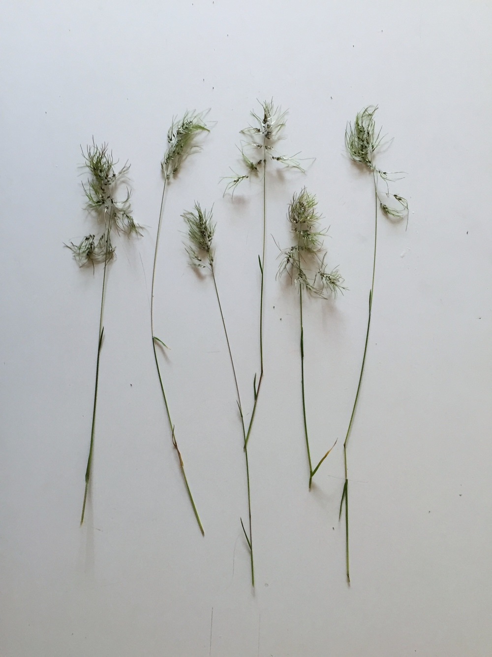 I love these grasses.