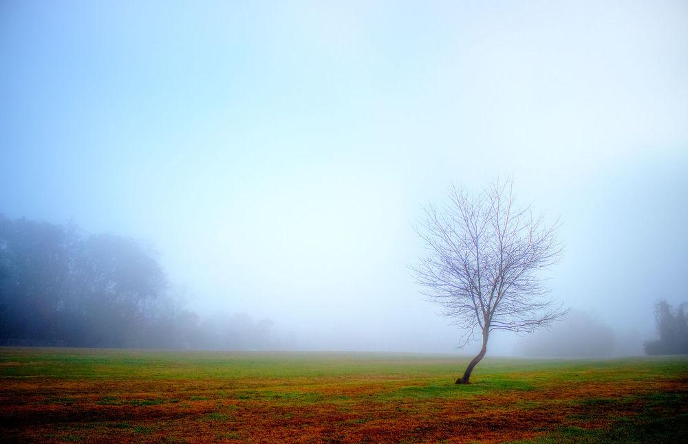 Cherokee Park Naked Tree.jpg