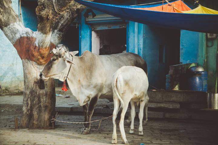 Agra_Taj_Mahal045