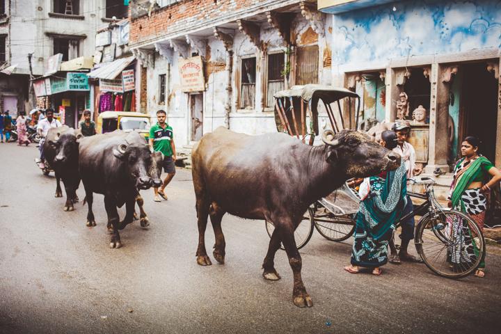 Varanasi_Marianna_Jamadi_01
