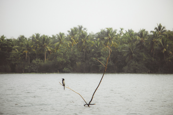 Kerala Backwaters_32