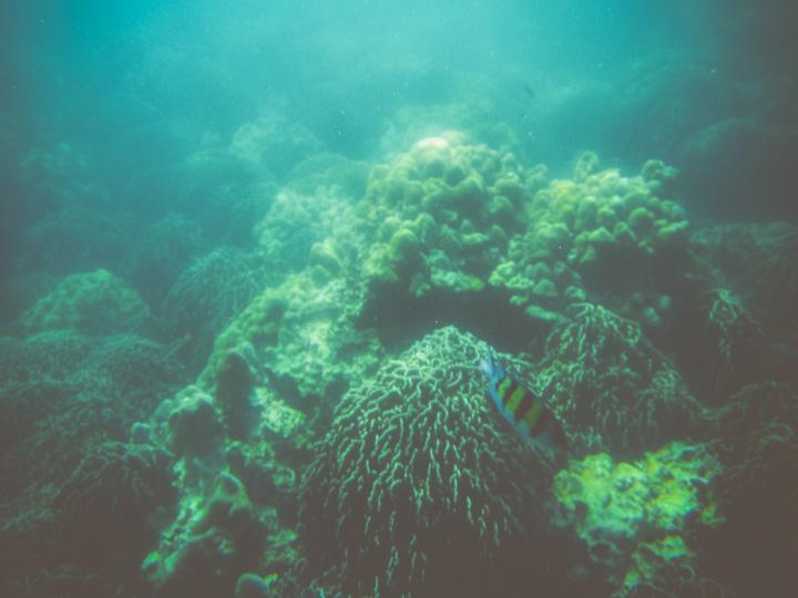 Snorkeling_Koh_Lipe_12