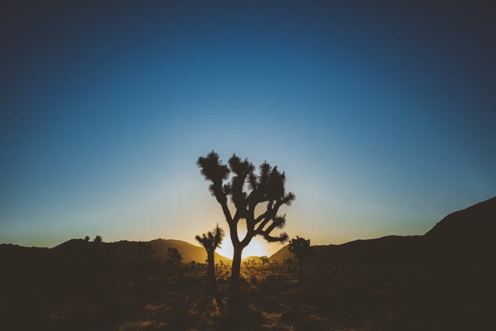 JOSHUA_TREE_16