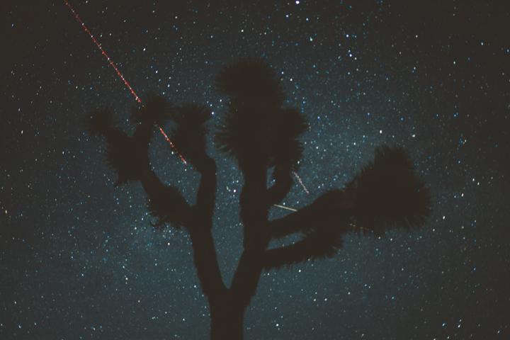JOSHUA_TREE_20