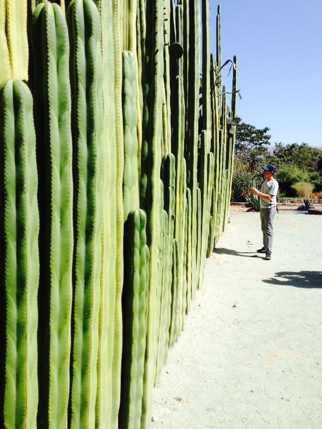 Wall o' cactus.