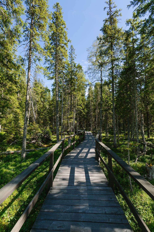 Sweden_Day4&5HighCoasttoLulea_blogselects_2016_jenniferleahyphotography-001.jpg