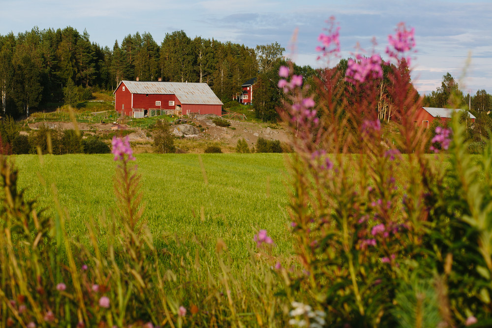 Sweden_Day4&5HighCoasttoLulea_blogselects_2016_jenniferleahyphotography-018.jpg