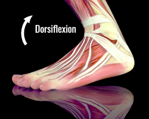 AnkleDorsiflexion.png