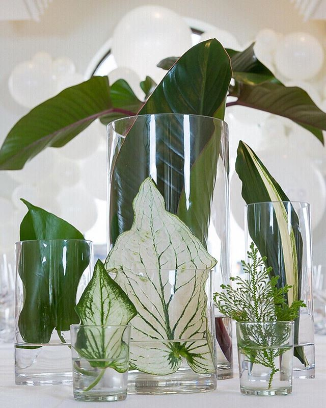 Bright White and Tropical Green details..... These Calathea leaves were to die for! Adding so much interest and texture to this clean, simple design. Planning | Styling @celebrationsbyalysia Image @deluxemediaweddings Floral work @thebellabloomco @thebellabloomcoinventory : : : #thebellabloomco #thebeautifulflowercompany #corporatechristmas corporatechristmaspartywithatwist #brisbaneflorist #abiadesignerofdreams2018 #abiadesignerofdreams2017 #brisbaneweddingflorist #tropical #calathea #congaleaf #whiteandgreen #tropicalvibe #christmastablestyling