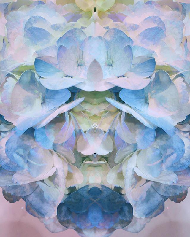 Flower power  #symmetry#parallels#flowers#purple#digi#indieart#indie#photoshop#vsco#purple#blue#yellow#flower#digital#pstouch#surreal#surrealistart