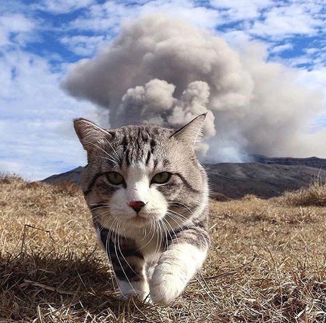 Current mood: Crushing shit right meow.! #iamklyce #crushing #likeaboss #onaroll #lifeisgood #kitty #catsofinstagram #mylife #sf