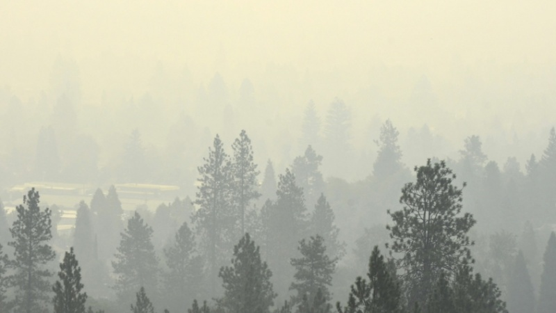 smoke in trees.jpg