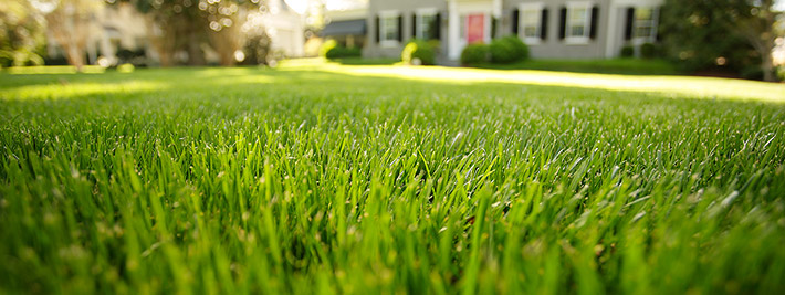 Organic Lawn Care Front Yard  |  Hillside Landscaping Co.  |  Landscaping Blog  |  Landscaping Picture