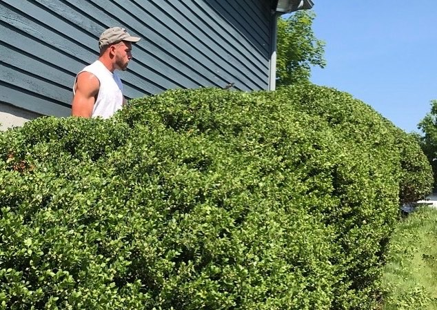 You know the saying.. Suns out.. trim the hedges! Great day to be outside with Ryan!
