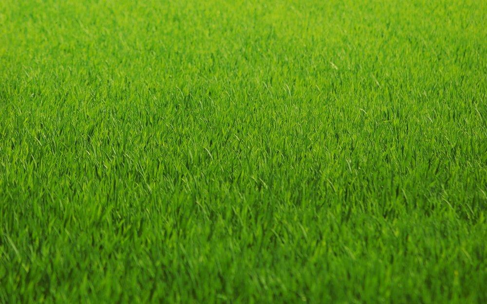 Grass_Image_12.jpg