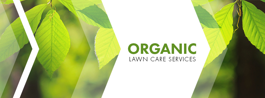 Organic Lawn Care Services By Hillside Landscaping | Berlin, CT