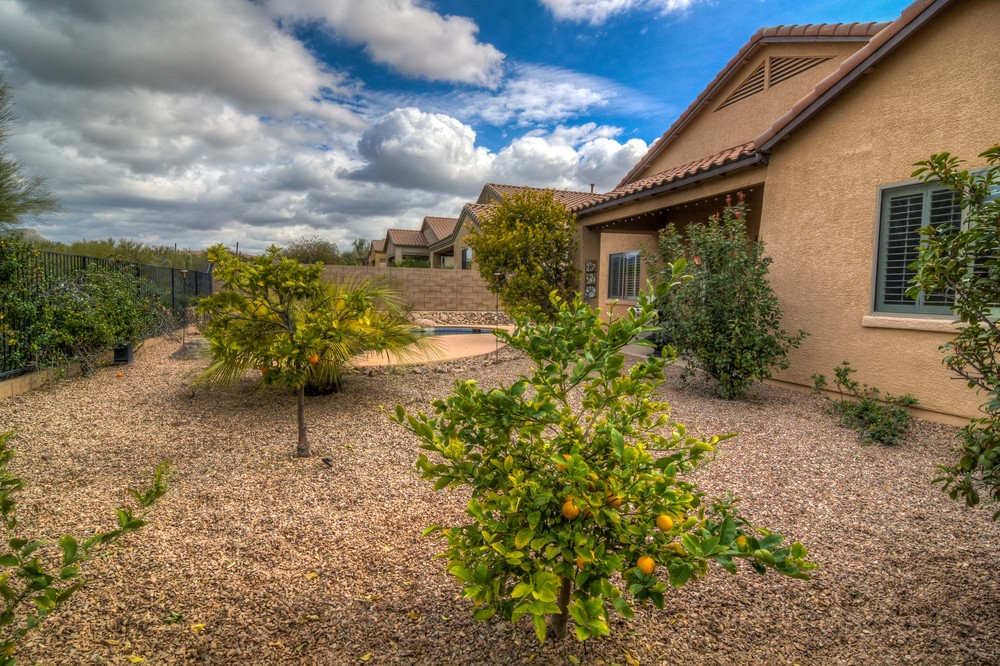 37 Backyard photo d.jpg