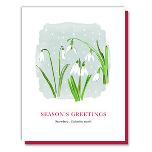 Greeting Cards — Driscoll Design
