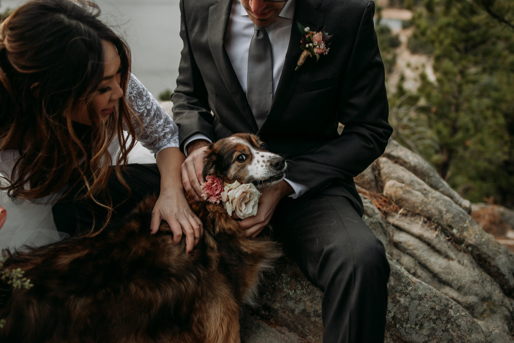 You should definitely bring your dog to your wedding day!