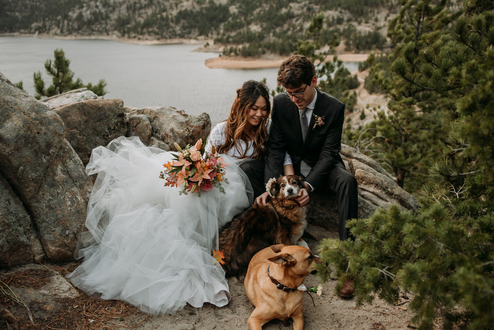 Have a small wedding with dogs and you wont't regret it.