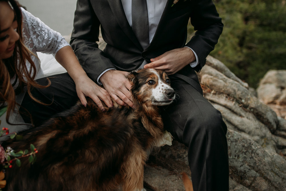 Elope with your dogs and you won't regret it.