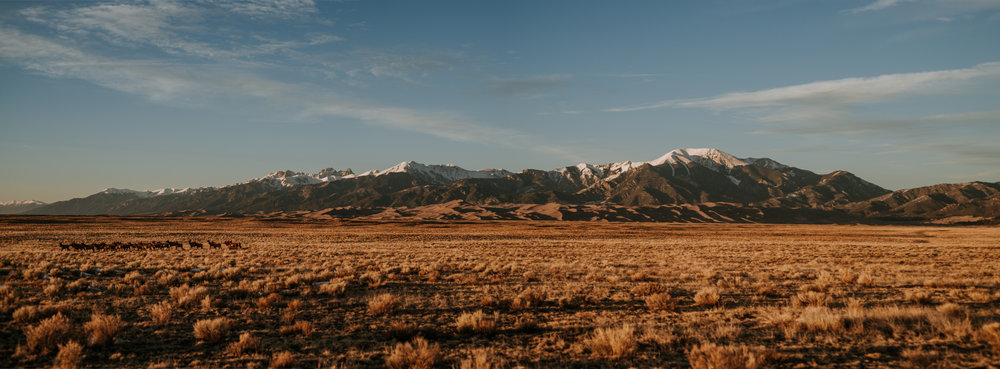 A herd of deer look up from eating as the Great Sand Dunes are dwarfed by the Sangre de Cristo Mountains.