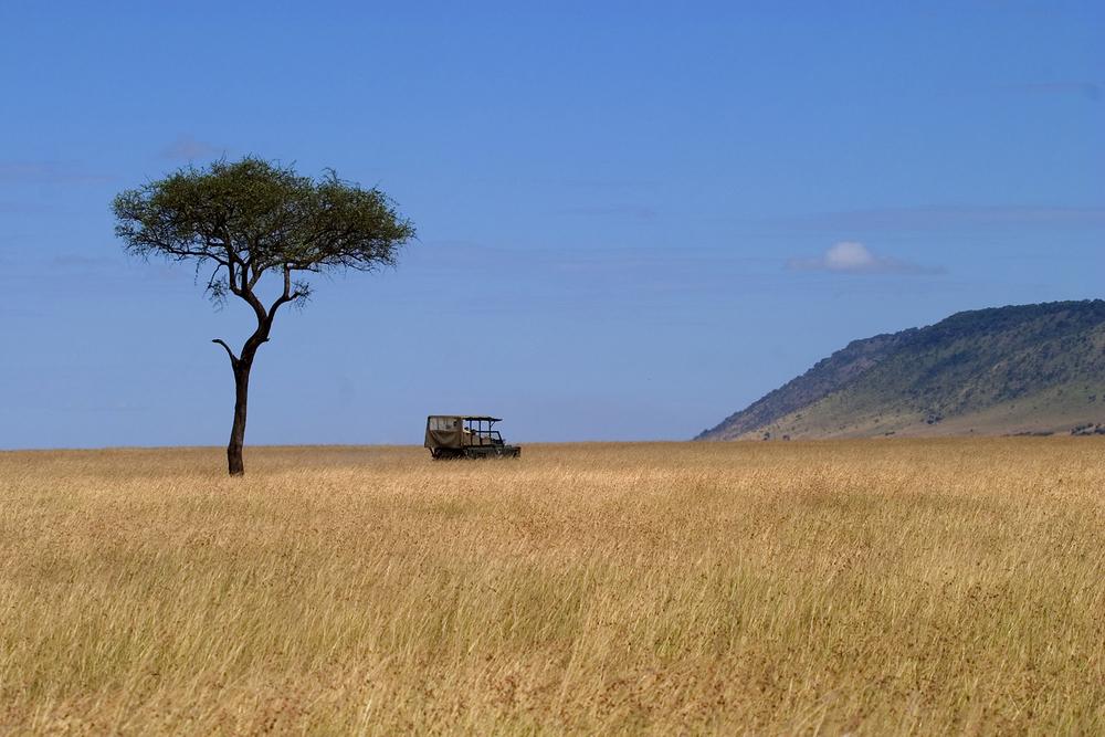 acacia tree and land rover.jpg