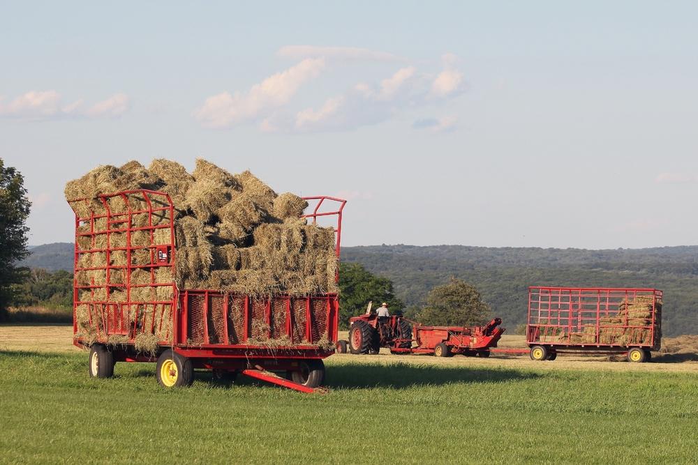 haying the field.jpg