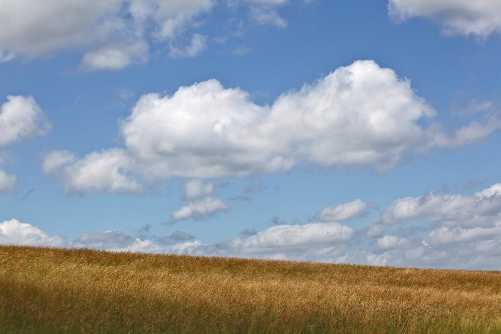 Upland Pasture2.jpg