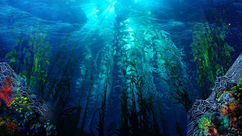 On_The_Fly_Underwater.jpg