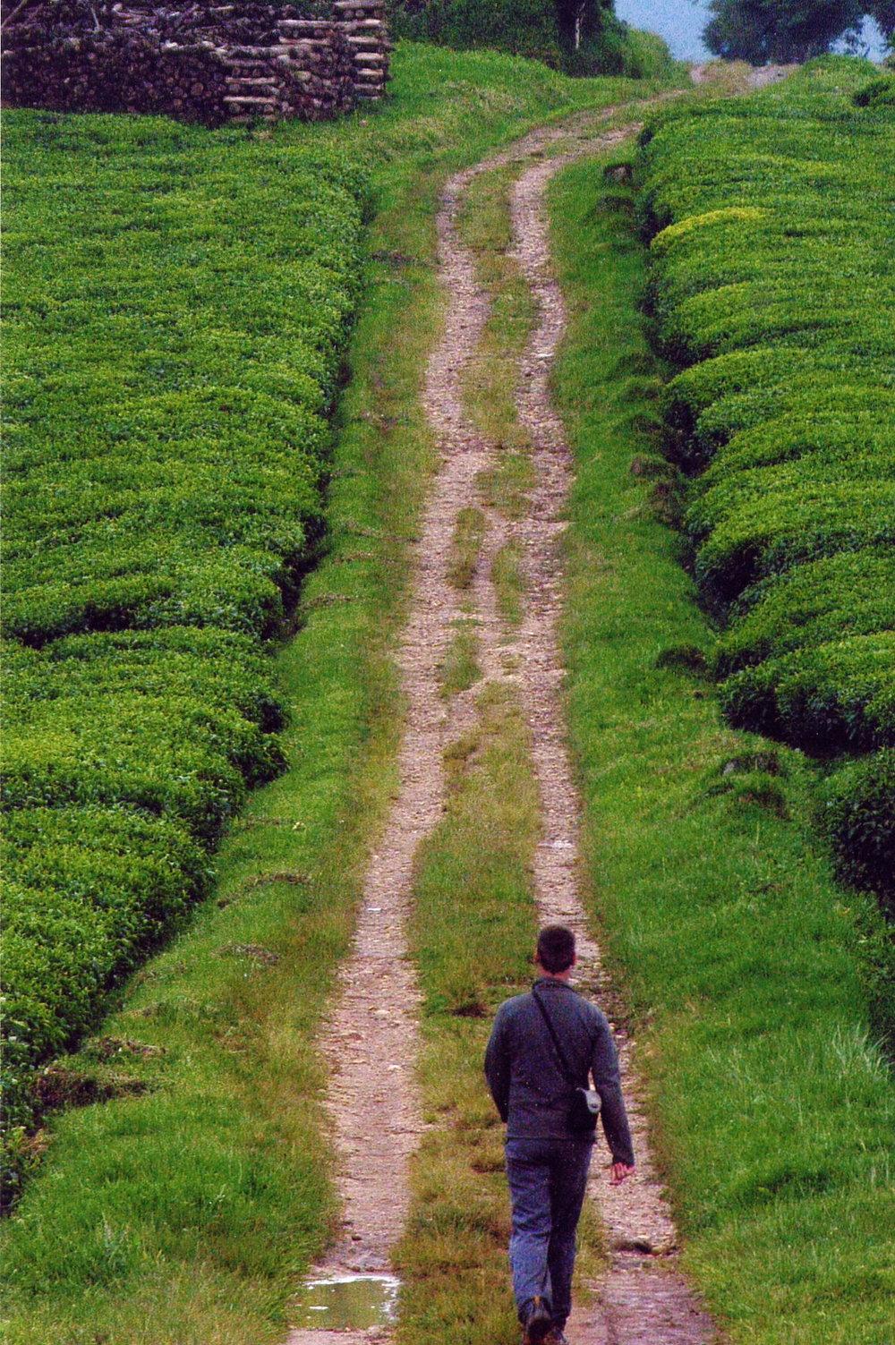 Ben, Rwanda tea fields, ascending on his journey.