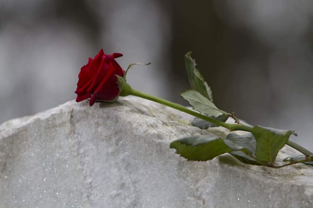 flower rose on stone.jpg