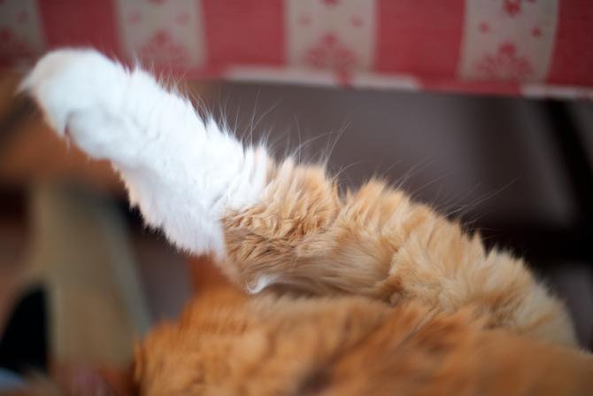 Tybee Cat