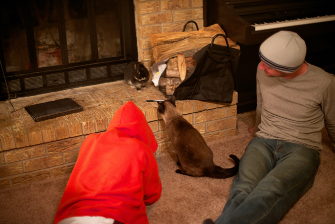 Bunny Trumpkin Cat Kilgore Texas Family Road Trip Naomi VanDoren