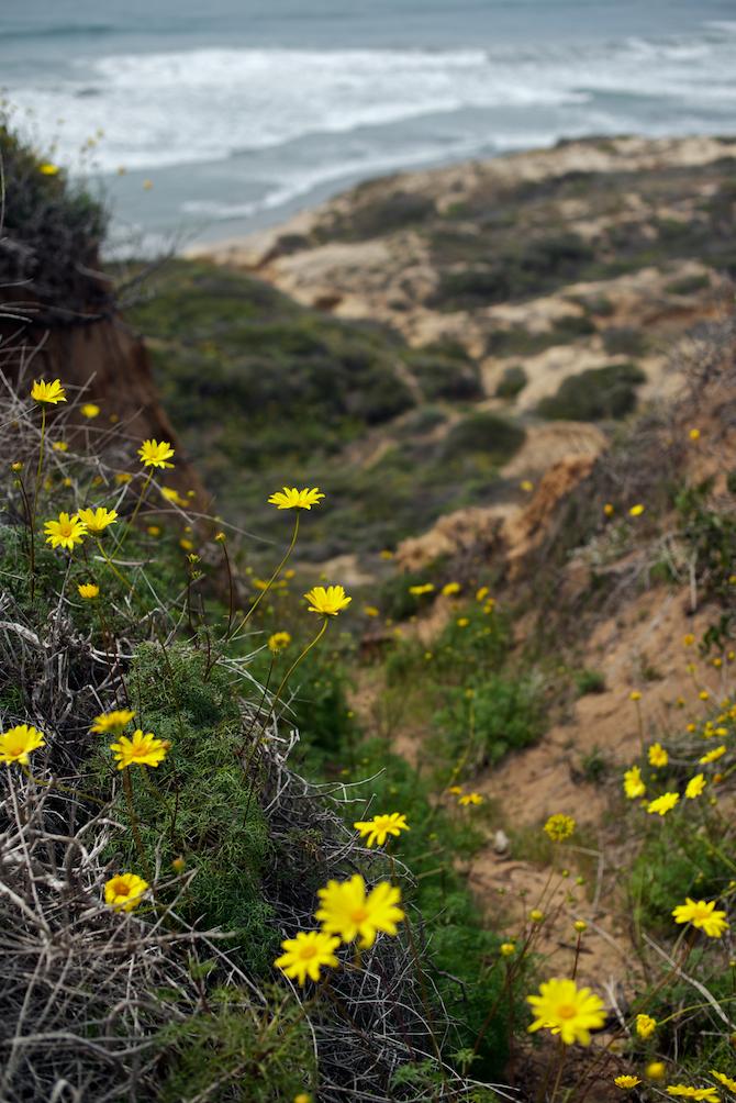 Torrey Pines State Park | NaomiVanDoren.com